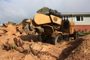 grinding-operations-root-removal-auckland-tree-work