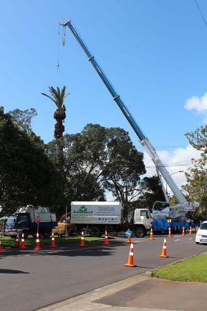 wheturangi-phoenix-palm-demolition-crane-removal